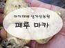 마카씨앗파는곳 / 마카씨앗파종 / 마카씨앗판매 / 마카모종 /  마카재배방법