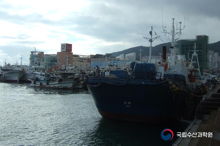 남해안 수산업 물류의 중심지, 여수수협을 찾아서