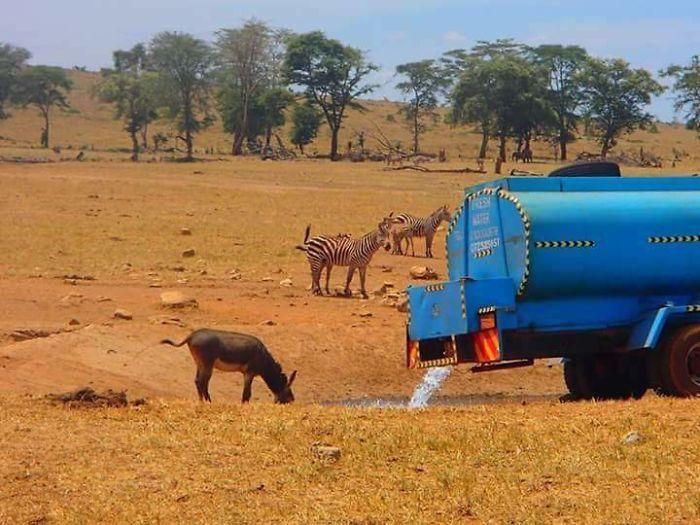 케냐, 목마른 동물들에게 생명수를 주는 사람들