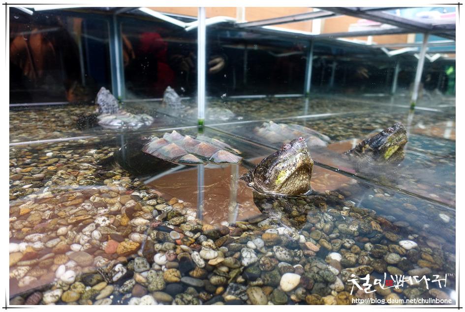 경북 울진 민물고기생태체험관